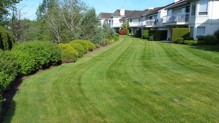 Lawn Detatching And Power Raking Fraser Valley