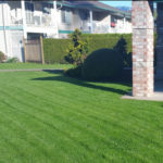 Lawn Overseeding Services Fraser Valley